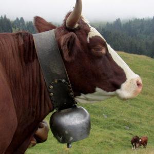 Vache Savoyarde