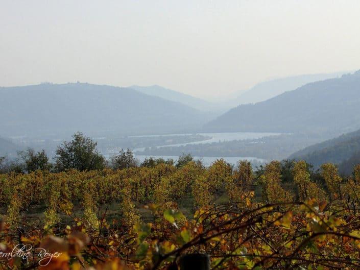Le Rhône vue des vignes