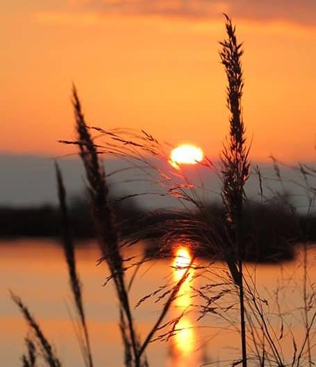 Coucher de soleil vu au travers des herbes