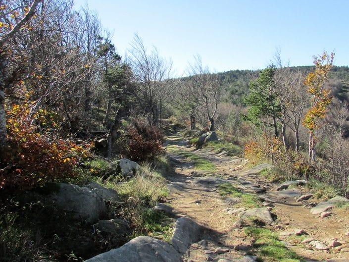 Chemin proche du Mont Mézenc