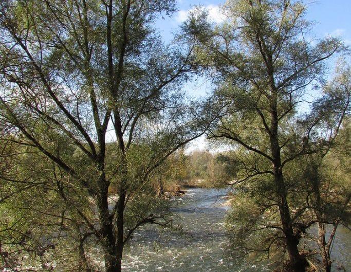 Deux arbres les pieds dans l'eau