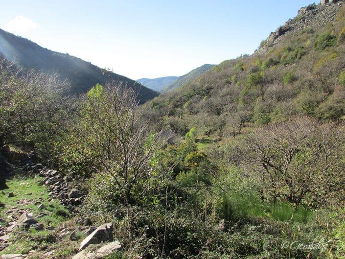 Vue dans Le Masoyer Ardèche