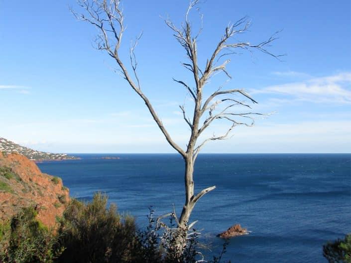 arbre mort littoral