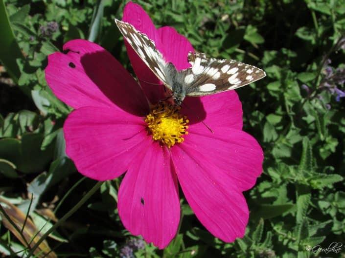 Petite fleur et papillon qui butine