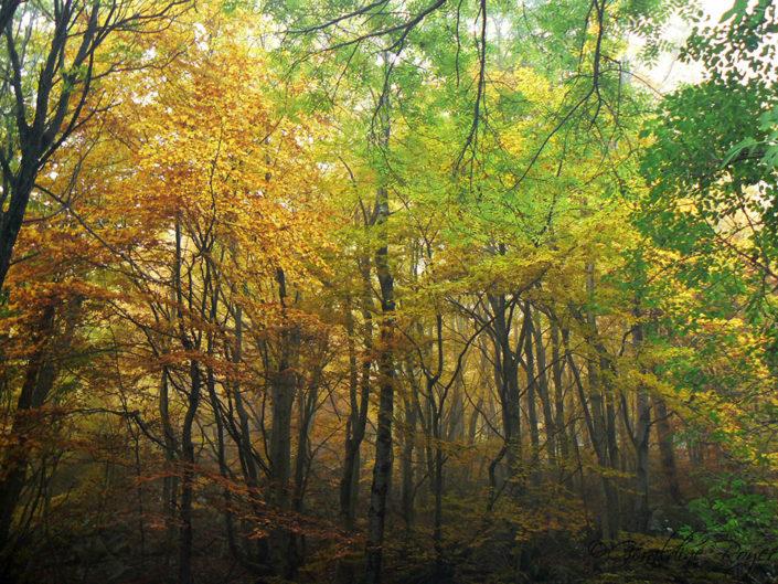 Forêt automnale Laviolle