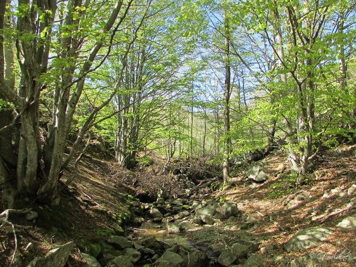 Vue en forêt en suivant un cours d'eau