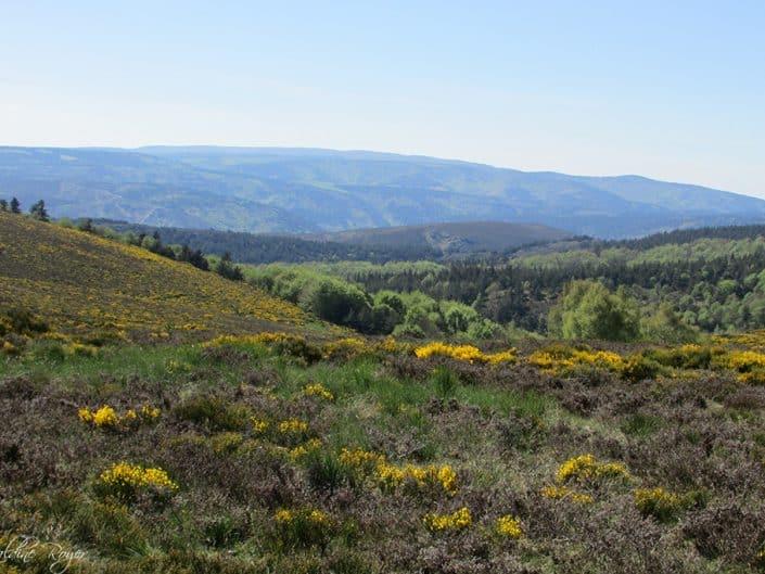 Vue sur le Mont Lozère